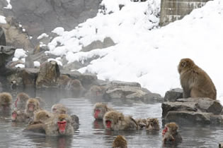 Photo from EBESA, Snow Monkeys and Tours in Yamanouchi, Nagano